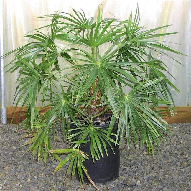 Фото декоративные домашние растения