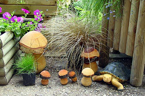 Растения осоки новозеландские злаки