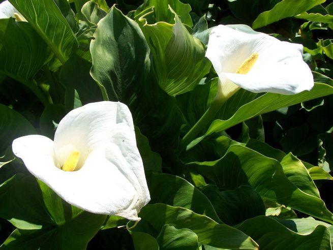 Цветок на букву у