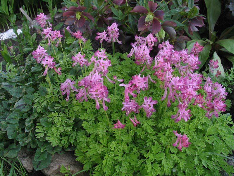 Яркие цветы фото комнатные цветы фото